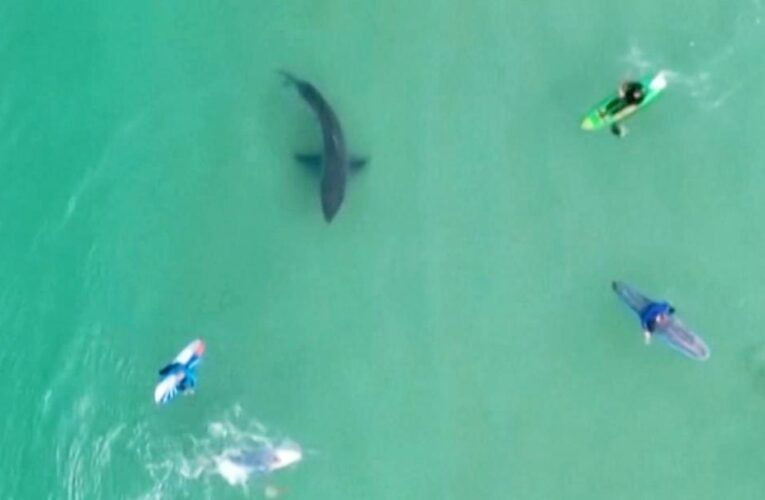 Video shows surfers unaware as great white shark lurks below