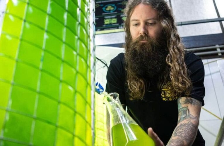 """Brewery uses Algae In Beer Production """"It takes a tree approximately two days to absorb the CO2 released from producing one six pack of beer. Young Henrys says their in-house cultivated algae not only absorb the CO2 released, they also produce as much oxygen as two and half acres of wilderness."""" : worldnews"""