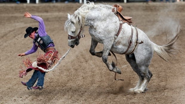 Horses can learn from rodeo experience and grow calmer, says U of C study | CBC News