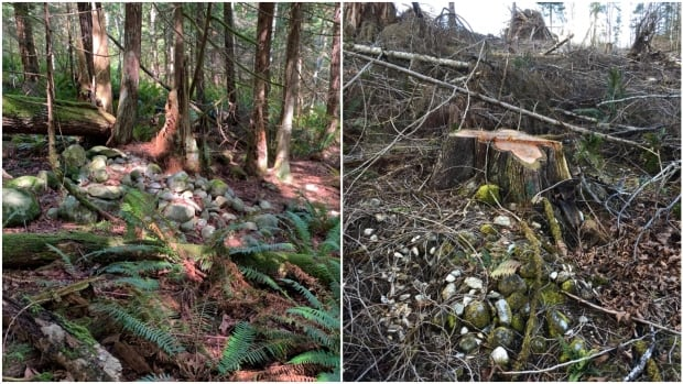 Shíshálh Nation demands action after burial site reportedly desecrated by logging | CBC News