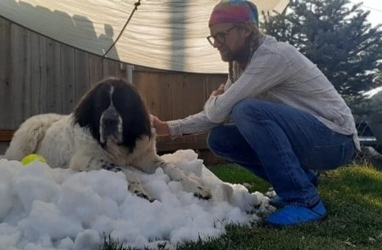 Snow delivered to winter-loving dog to have one last play on her death bed