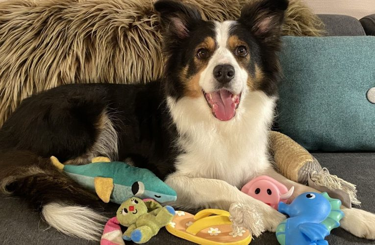 'Gifted' dogs learn names of a dozen toys at 'remarkable speed' in new study