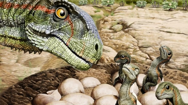 Scientists find oldest fossils of dinosaurs living in a herd | CBC News